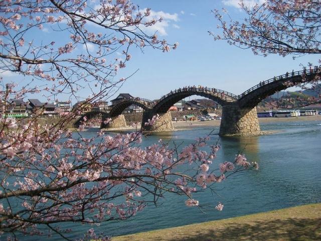 錦帯橋・桜1