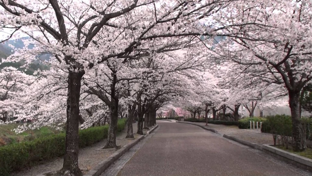 京都花見・2