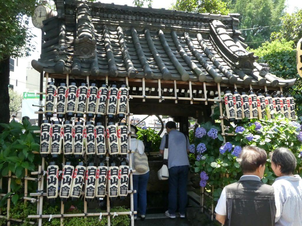 東京「白山神社」あじさい祭り2016 (9)