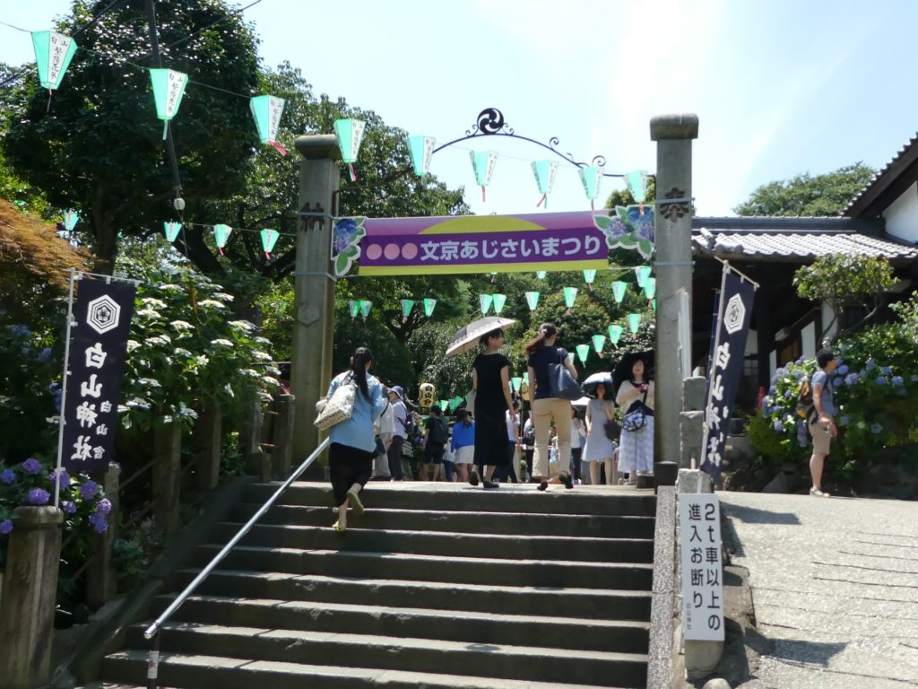 東京「白山神社」あじさい祭り2016 (3)